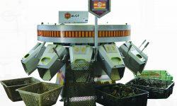 Сортировочные линии для предтоварных и товарных устриц